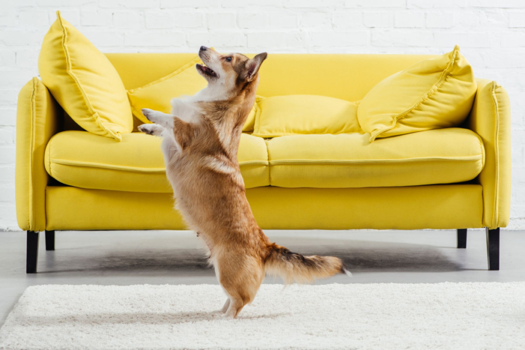 best home training treats for dogs